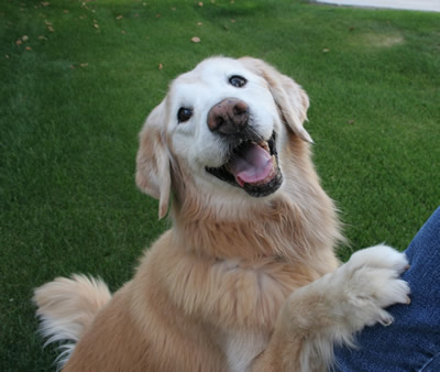 Molly who died of Cancer