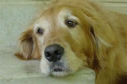 Cody who died of Cancer